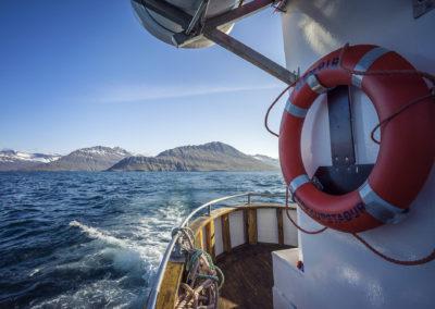 Norðfjörður – nature and wildlife