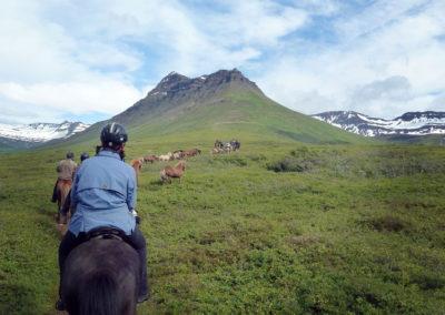 Horse riding in Norðfjörður