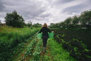 Vallanes organic farm